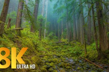 8K Olympic National Park, USA - Nature Documentary Film with Relaxing Music - Episode #2